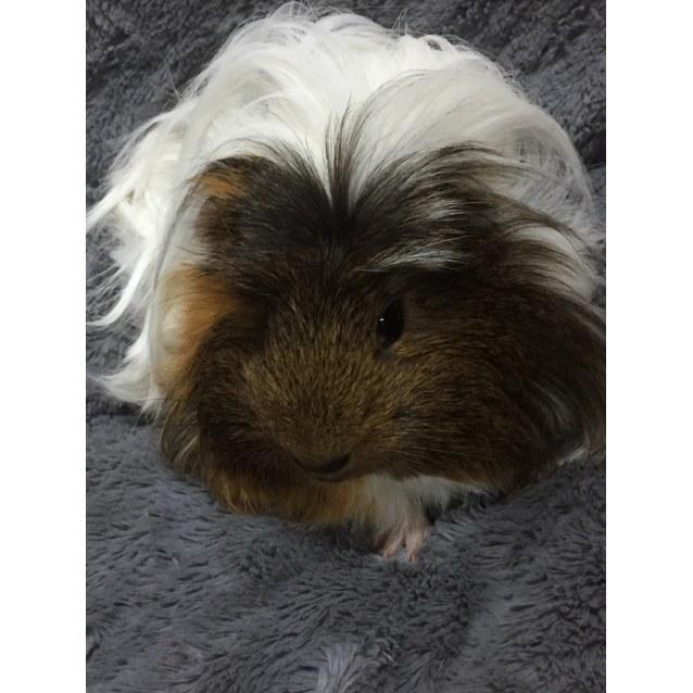 Photo of Elvis Pigsley