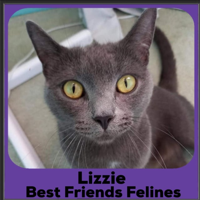 Photo of Lizzie