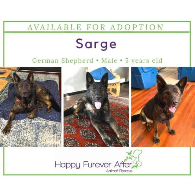 Photo of Sarge