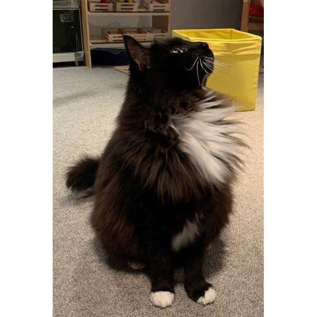 Photo of Obie