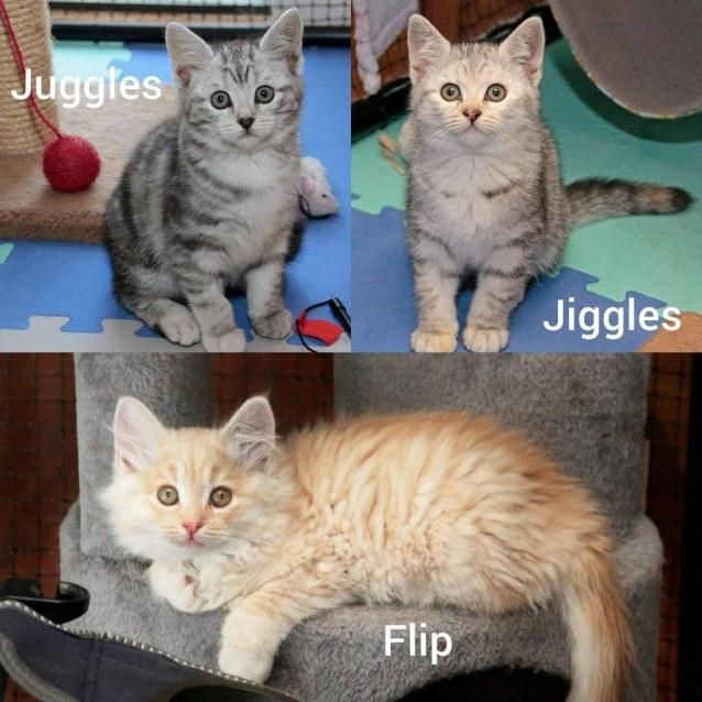 Photo of 3627/3626/3625   Juggles Jiggles & Flip