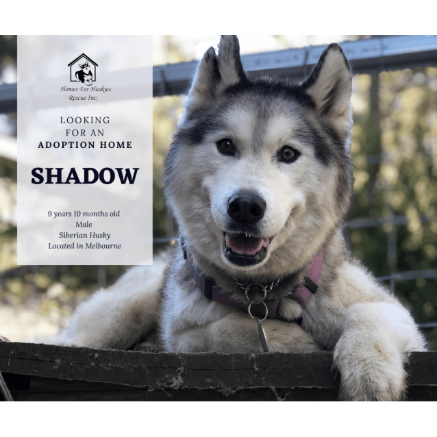 Photo of Shadow