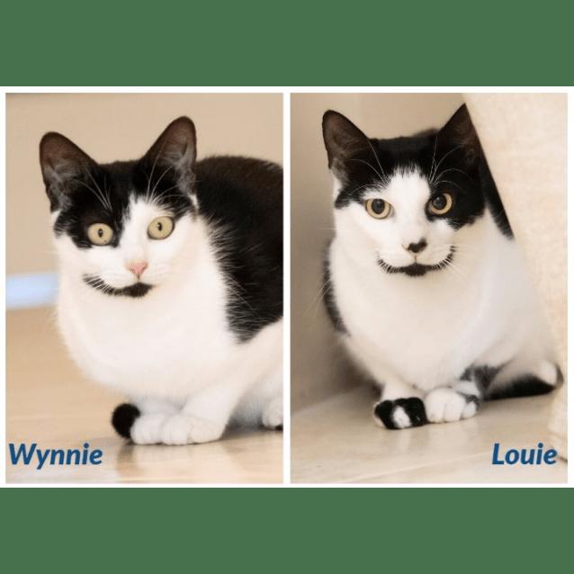 Photo of 1587/1533   Wynnie & Louie