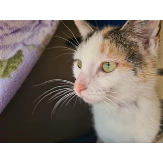 Photo of Zena