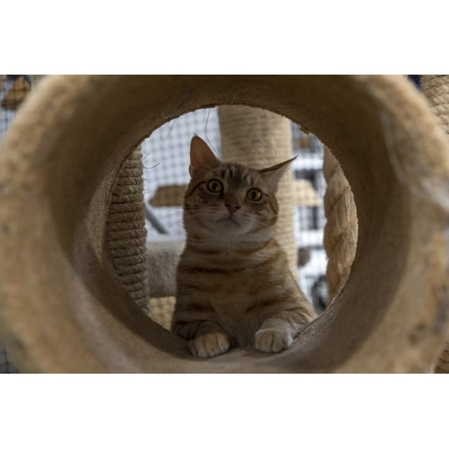 Photo of Milo   Visit Me At Pe Tstock Claremont!