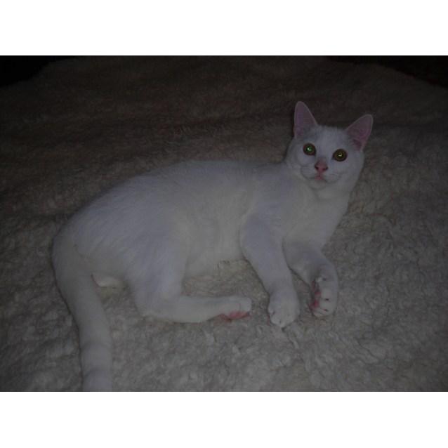 Photo of Rino