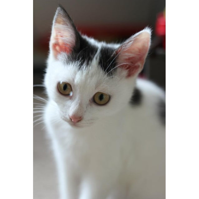 Photo of Domino