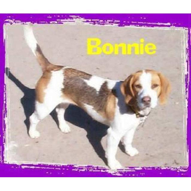 Photo of Bonnie
