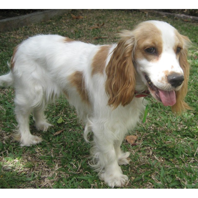 Pet Rescue Qld Small Dogs