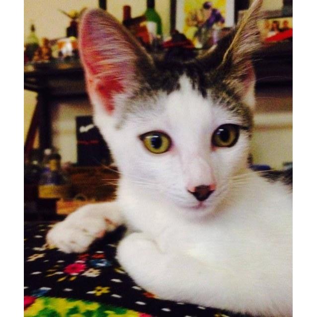 Photo of Pacino