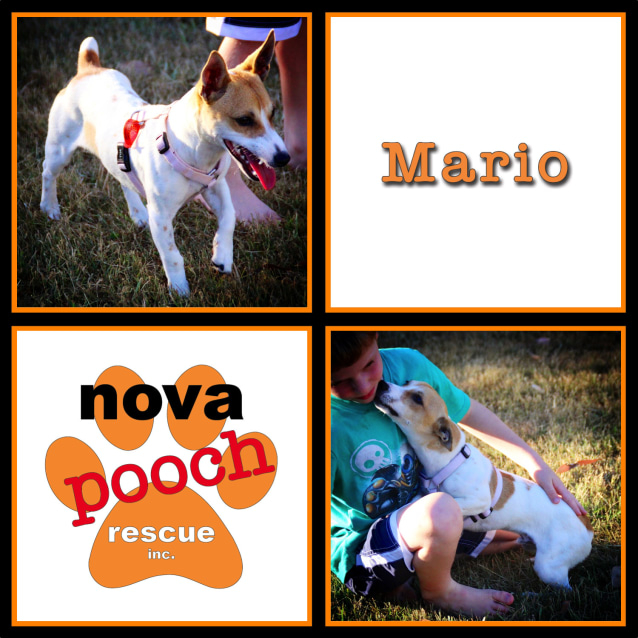 Photo of Mario ( I Am On 2 Weeks Trial In My New Home)