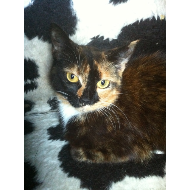 Photo of Phoebe (Located In Bulleen)