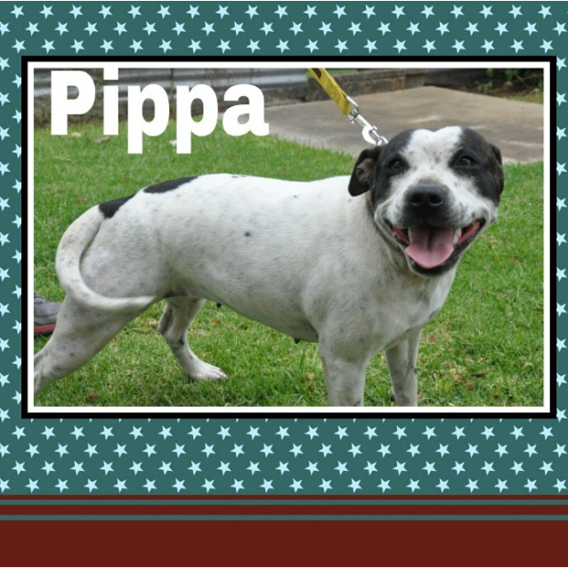 Photo of Pippa