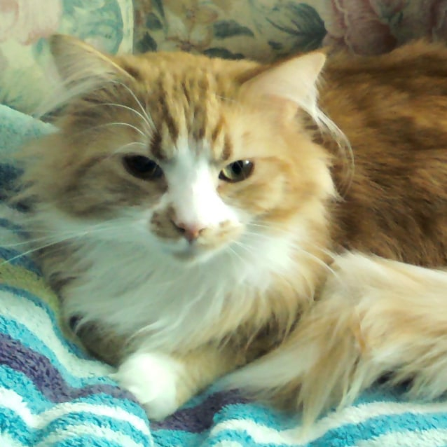 Photo of Marmalade (Located In Northcote)