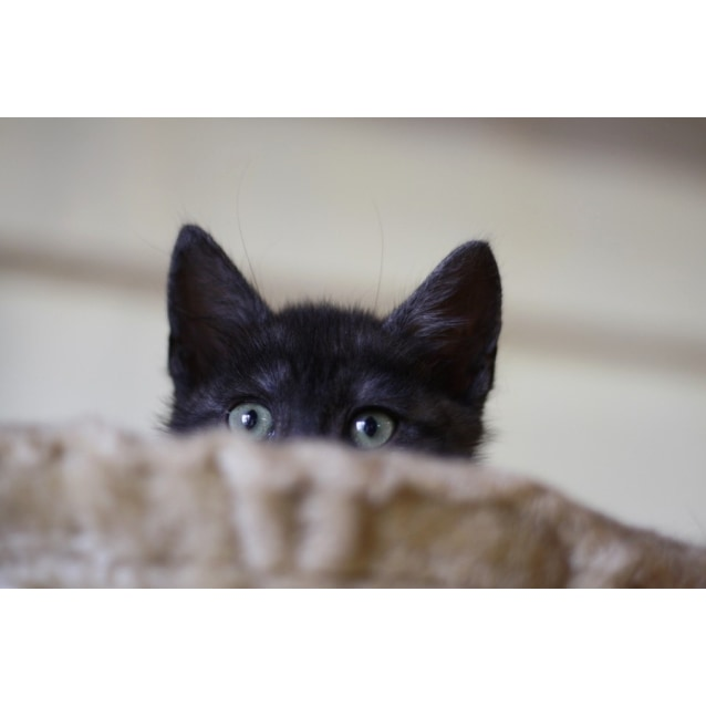 Photo of Pound Cats | Spook