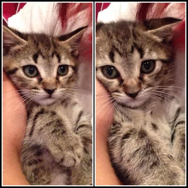 Photo of Pound Cats | Frankie