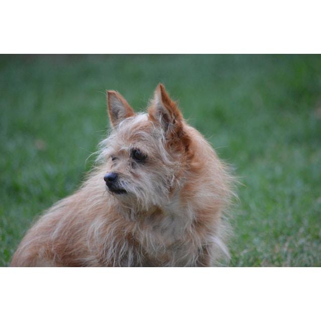 Photo of Gidget