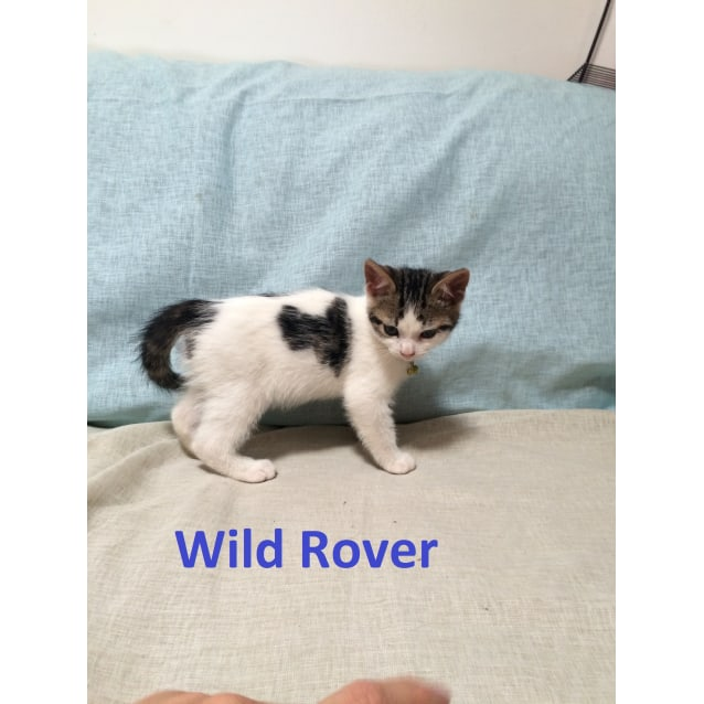 Photo of Wild Rover