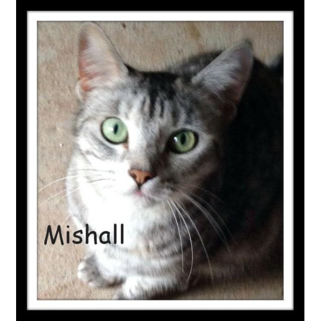 Photo of Mishall