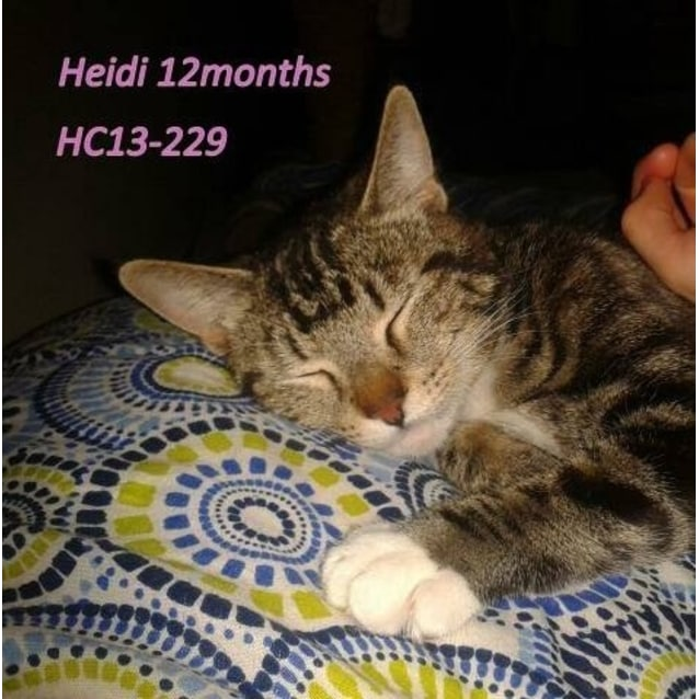 Photo of Heidi Hc13 229