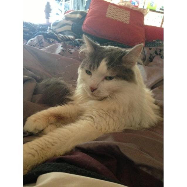 Photo of Milo: Mr Smoochy **Winter Special**