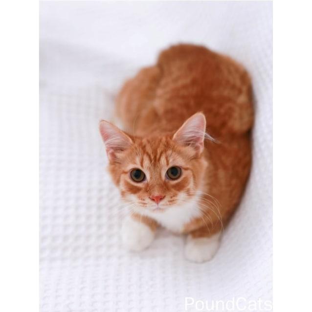 Photo of Pound Cats   Cato