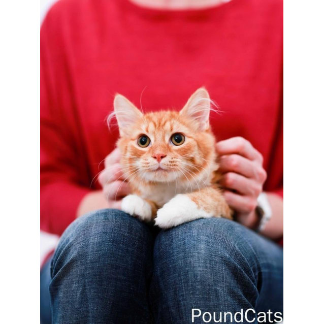 Photo of Pound Cats | Cato