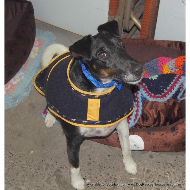 Photo of Skipper (On Trial  6/5/14)