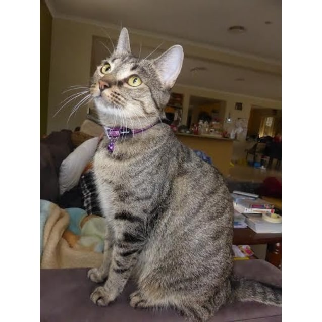 Photo of Nylah~Sweet & Affectionate