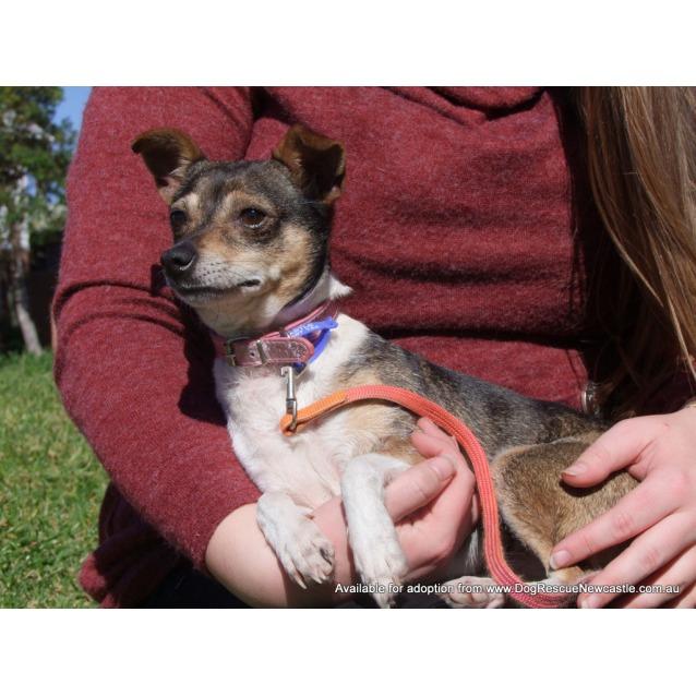 Photo of Wynnie (On Trial 6/12/14)~ Mini Foxy