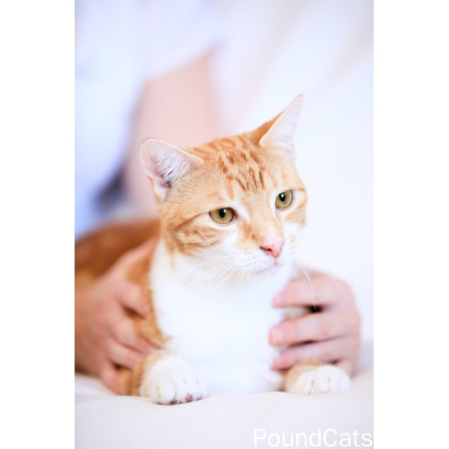 Photo of Pound Cats | Angus