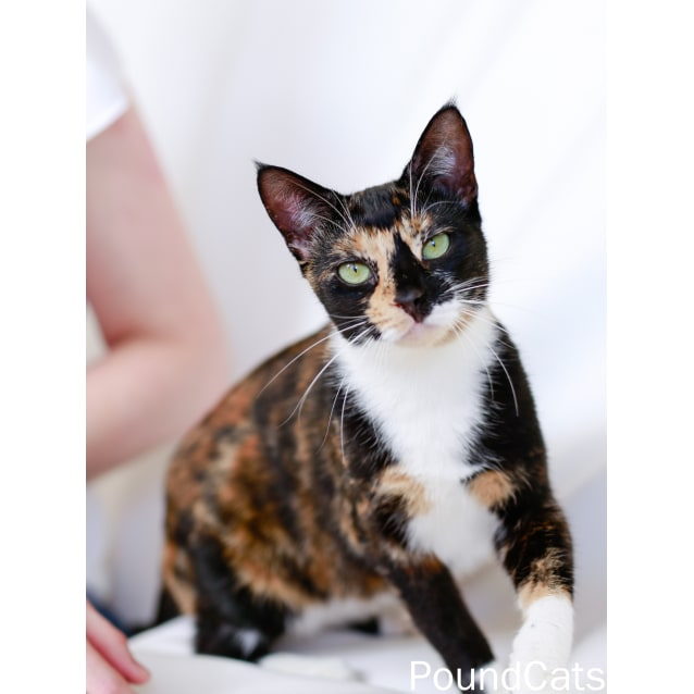 Photo of Pound Cats   Lily