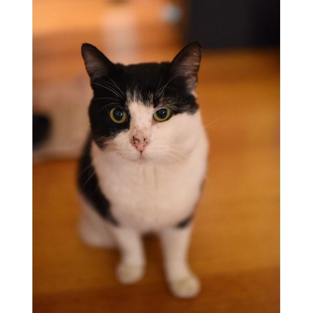 Photo of Stumpy Jack A Three Legged Cat! (No Special Needs)