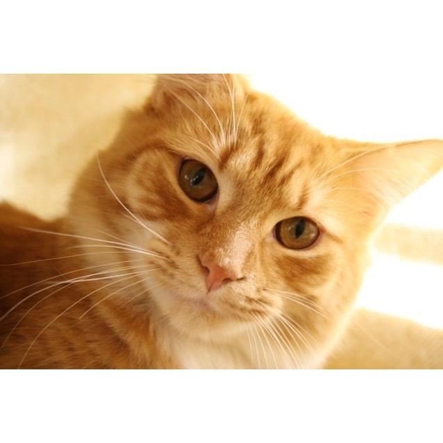 Photo of Pound Cats | Cato