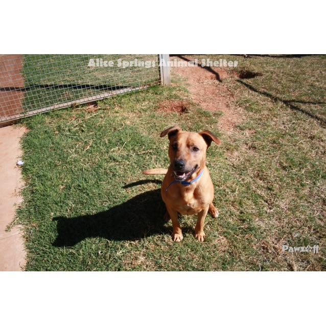 Photo of Barney   193/14