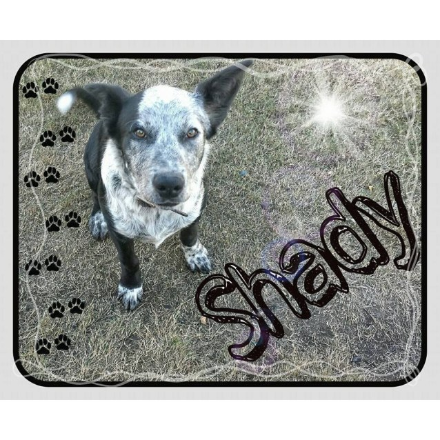 Photo of Shady