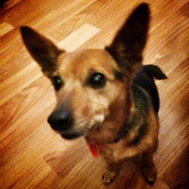 Photo of Bellah