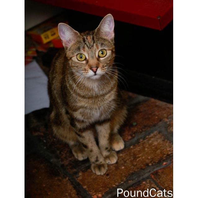 Photo of Pound Cats | Cassie