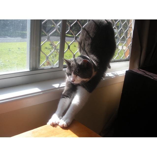 Photo of Wilma