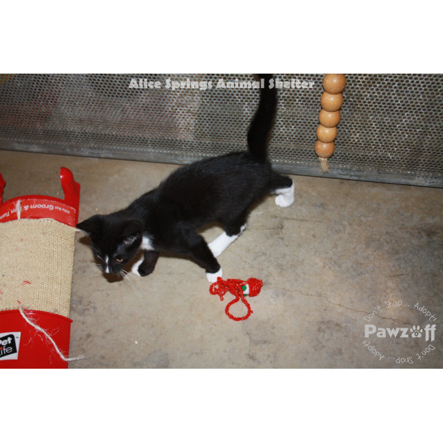 Photo of Tux   408 F14