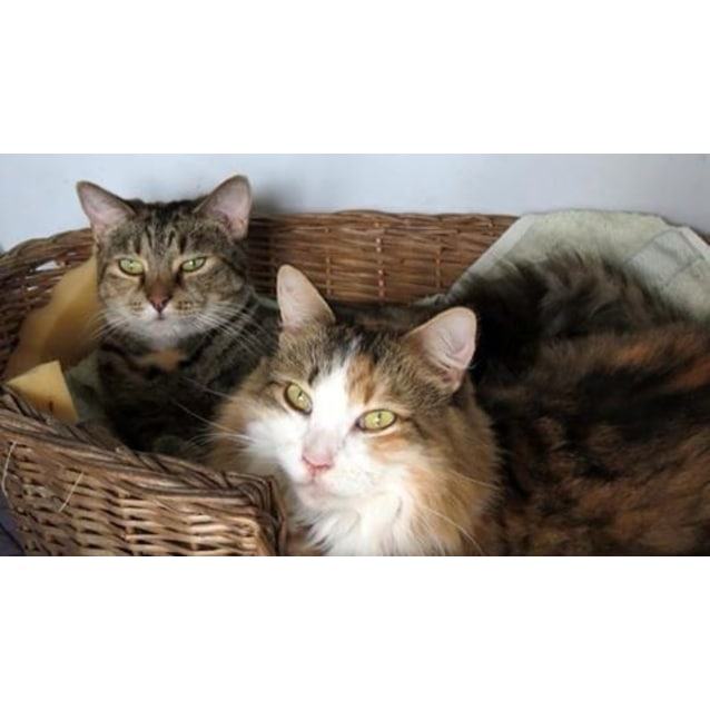 "Photo of ""Molly And Denise"" $99   Purrfect Match"
