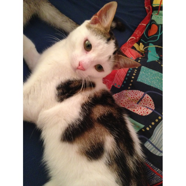 Photo of Keiko (Located In North Fitzroy)