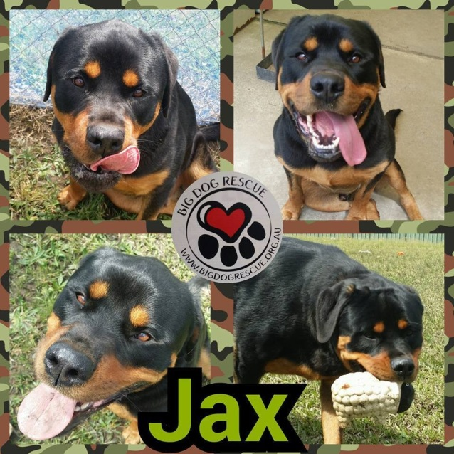 Photo of Jax