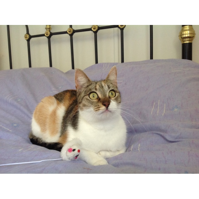 "Photo of ""Olivia"" Purrfect Match"