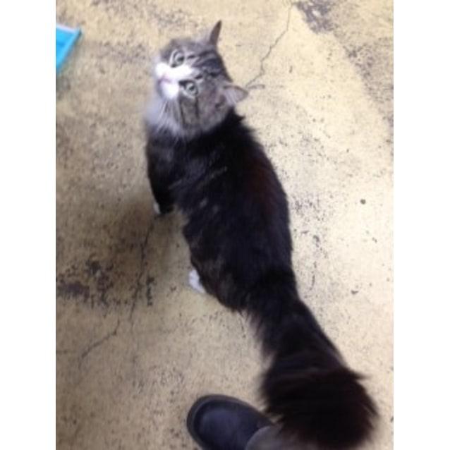 Photo of Tucker  **Campaign Cat**