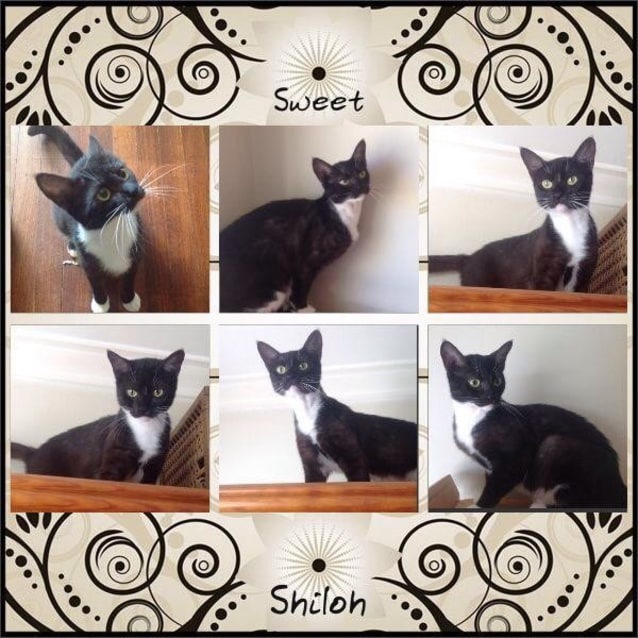 Photo of Shiloh If003 14