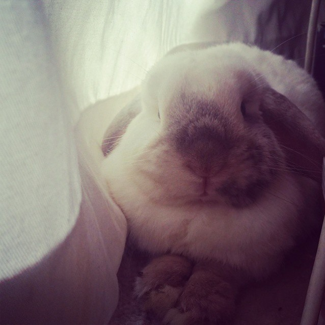 Photo of Peter   *Special Needs House Bunny*