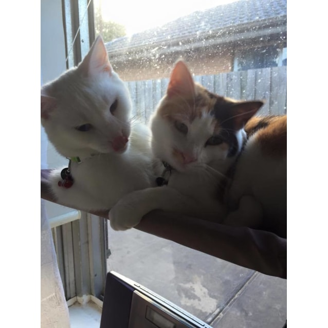 Photo of Dani (And Her Brother Daniel, Located In Altona)