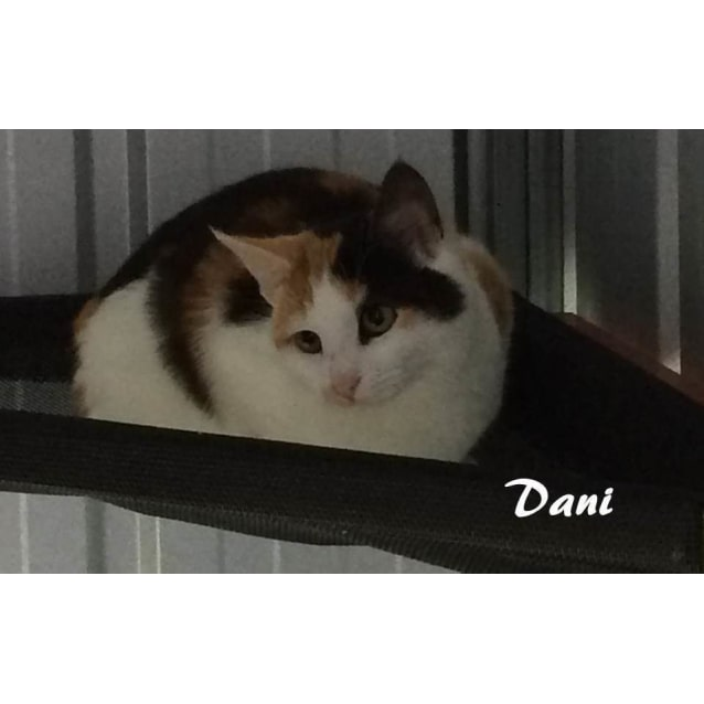 Photo of Dani (And Her Brother Daniel, Located In Altona)