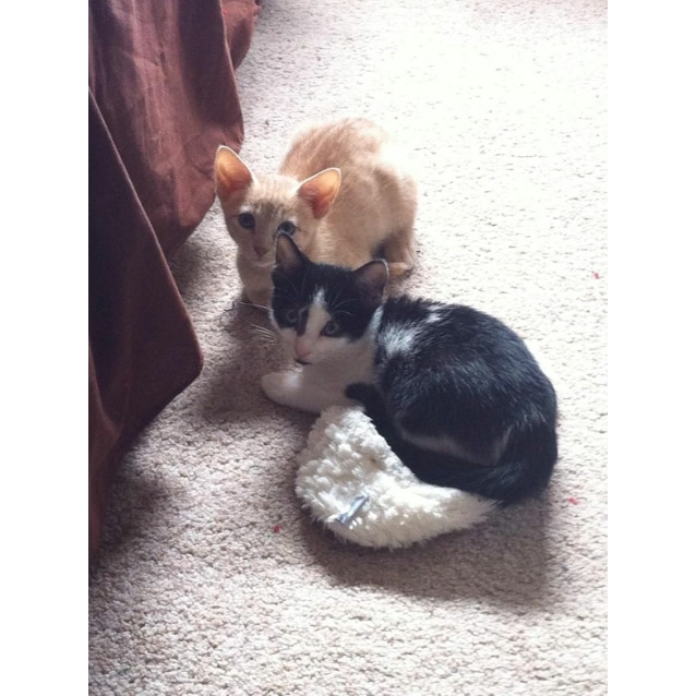 Photo of Simba And Pixie
